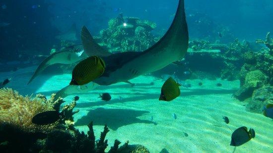 Sea World: Shark Bay