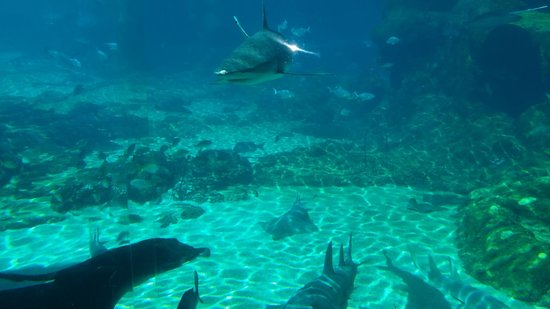 Sea World: Shark Bay