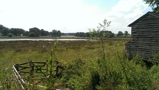 The Vyne: Across the marshland where you can birdwatch - with a list inside the hide