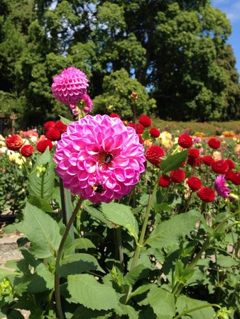 Point Defiance Park: At the Rose Garden