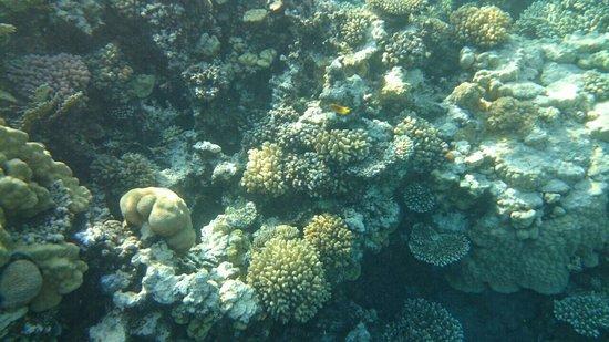 Sheraton Soma Bay Resort: Beauty