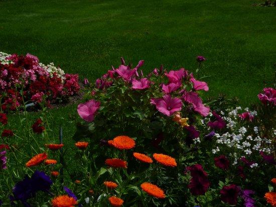 Roosevelt Campobello International Park: Some of the beautiful flowers outside the Information Center