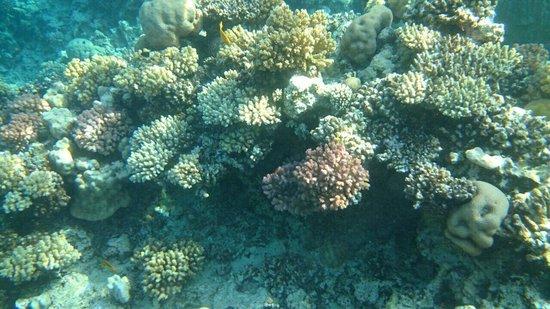 Sheraton Soma Bay Resort: Corals