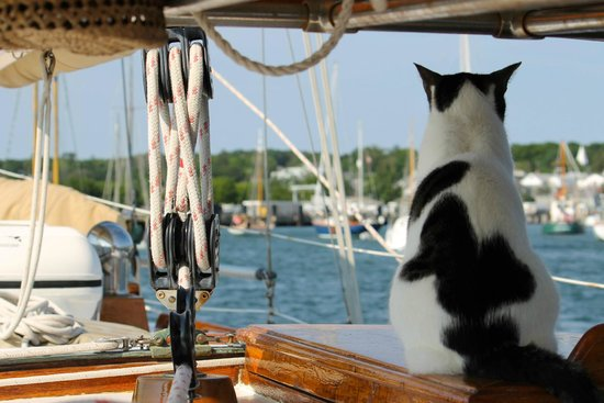 Witch of Endor Sailing Charters: Pan-Pan the cat