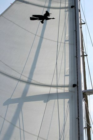 Witch of Endor Sailing Charters: The sail