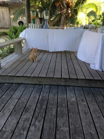 Little Polynesian Resort: Buffet colazione