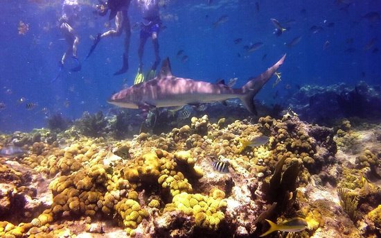 Looe Key (Florida Keys National Marine Sanctuary): Close enough!