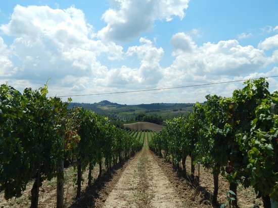 The Best of Tuscany Tour: Vineyard