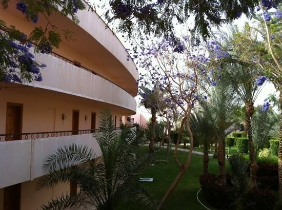 Royal Azur Resort: Vue porte d'entree chambre