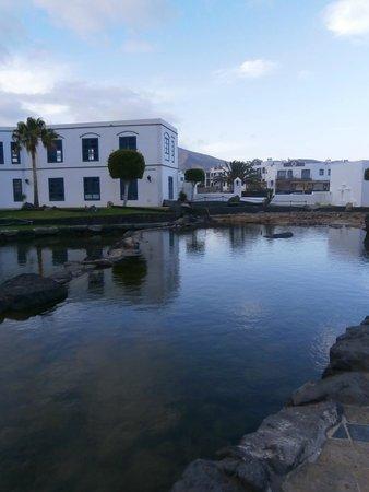 Marina Rubicon : fish feeding area