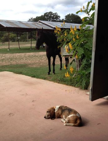 Montesino Ranch Studios : Be greeted by Nellie and Black Jack