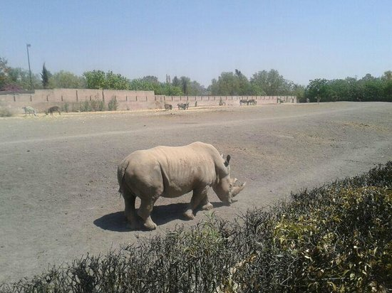 Queretaro, Mexico: Rhino at Wameru