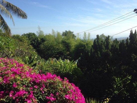 The Damai: Mooie omgeving
