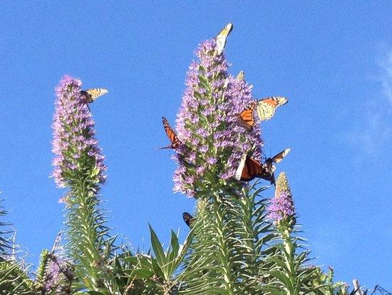 The Esalen Institute: lots of butterflies