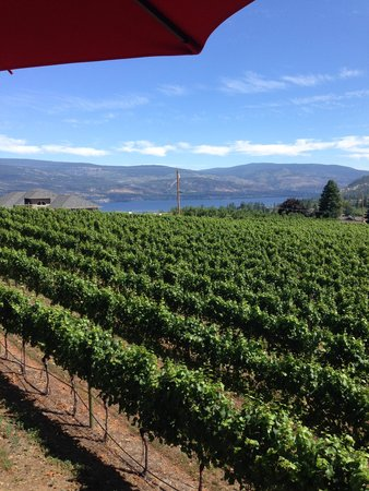 Thornhaven Estates: view from the deck outside the winetasting room