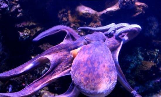 Palma Aquarium: красавчег