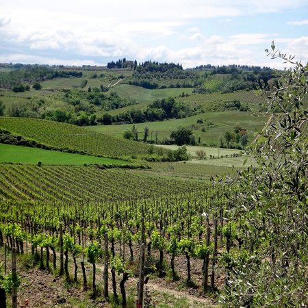 Walkabout Florence Tours: Winery at lunch