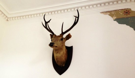 Strongarbh House: The welcoming stag!