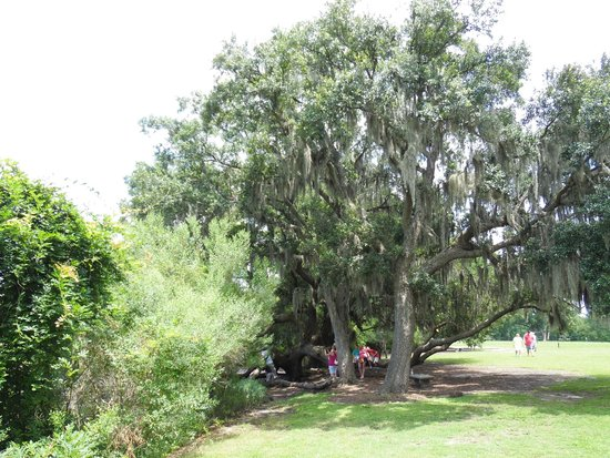 Boone Hall Plantation : The famous 600 year-old Oak