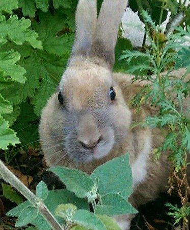 Casa Colibri eco-Lodge: Bunny Linda