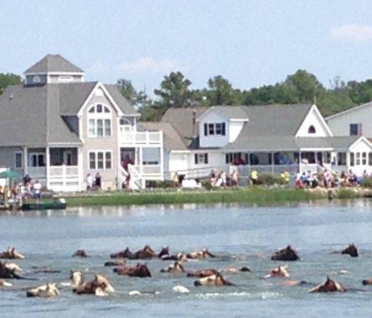 Channel Bass Inn: Pony swim 2014