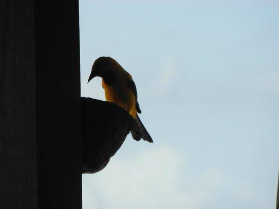 Jan Kok Lodges : elke dag de vogels eten geven, zo leuk!