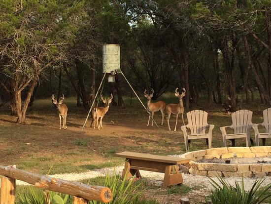 Lazy H Lodge B&B : The deer visit every morning and evening.