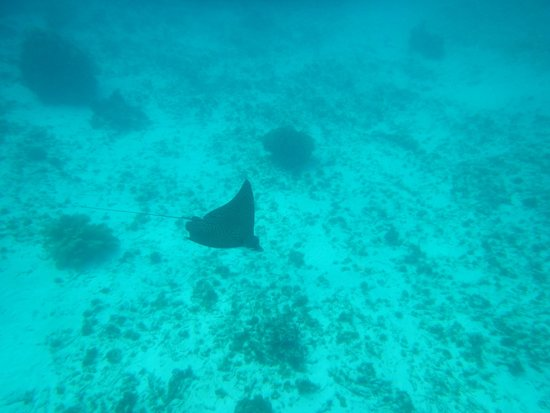 X'tan Ha Resort : Eagle Ray. Mexico Rock. We paddled out with a Kayak.