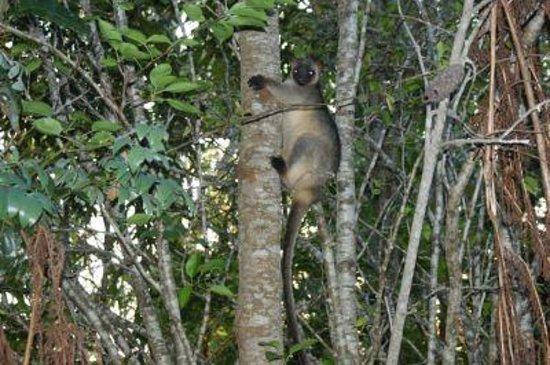 Chilverton Cottage & Restaurant: Spotting Tree Kangaroos