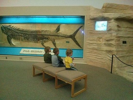 Sternberg Museum of Natural History: Watching fish within a fish film