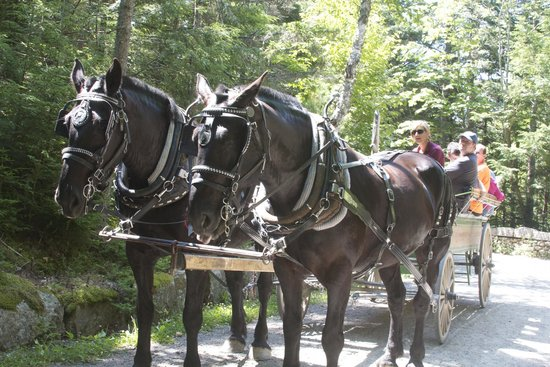 Carriages of Acadia: Betty White and Reba McEntire (l to r)