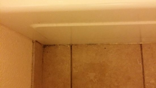 Red Roof Inn Tallahassee: mold