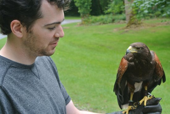 Ireland's School of Falconry: Ishka