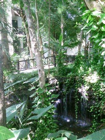 The Reef Coco Beach: il giardino