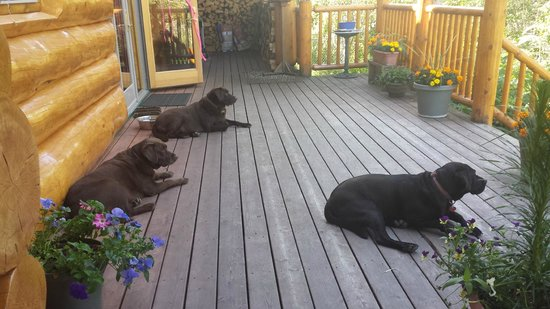 Bob's Cabin & Guide Service: Welcoming Committee on the front porch