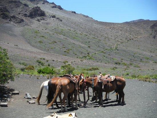 Haleakala Crater: Horses taking a brake at lunch