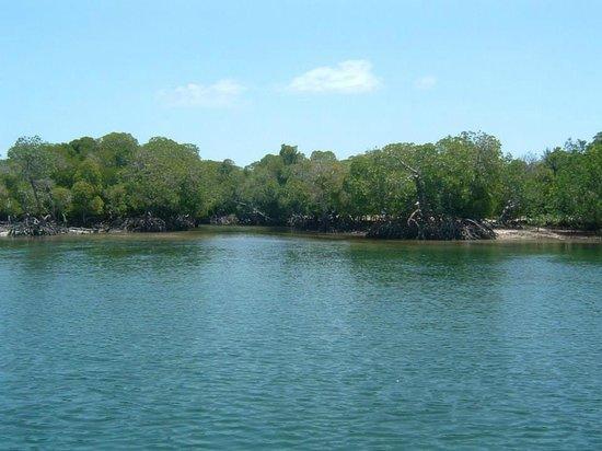 Eden House Cottages: Mangrovie