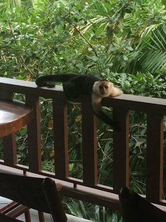 Hotel Costa Verde: Our visitor on our balcony