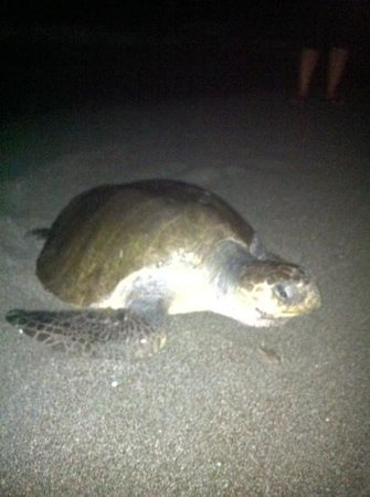 Luz en el Cielo Eco-B&B/Hostel: Ran into this guy on the beach one night