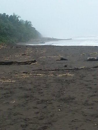 Laguna Lodge Tortuguero : Black sand beach