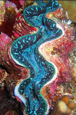 Wakatobi Dive Resort: Watch your fingers:-)