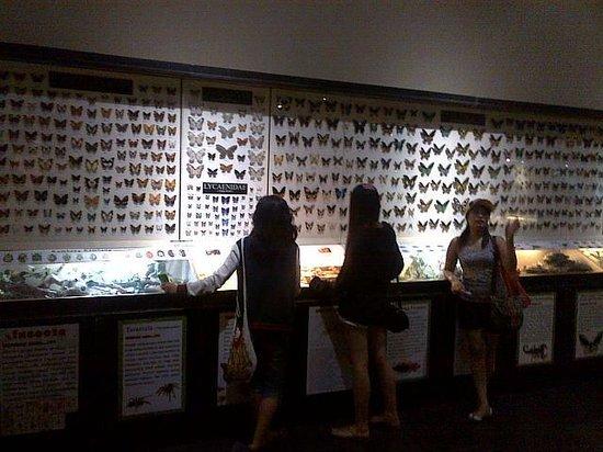 Batu Secret Zoo: Insects