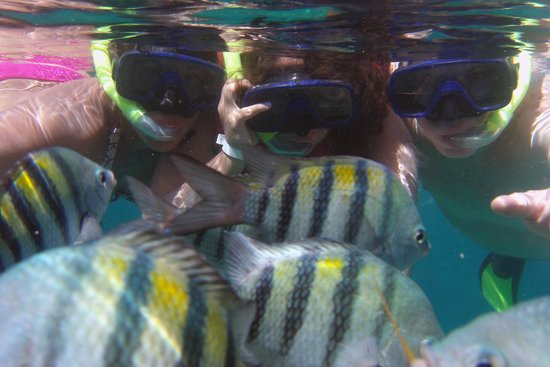 Memories Varadero Beach Resort: Actividad Recreativa de Snorkeling