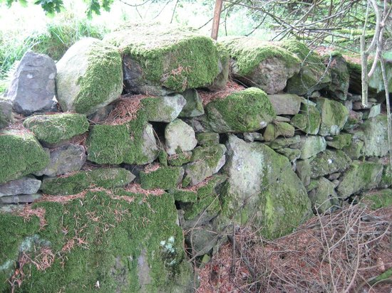 Crags Hotel: Nearby falls walk- stone wall
