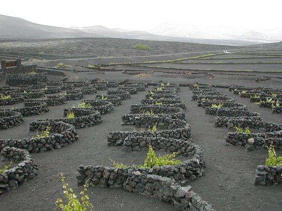 Parque Nacional de Timanfaya: cultivo de la vid