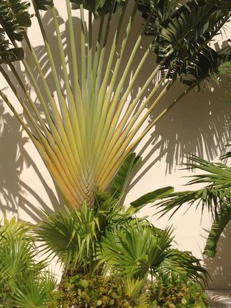 Beloved Playa Mujeres: Palm tree that looks like an actual palm