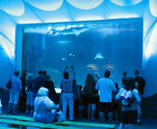 Newport Aquarium: Theater with View Port into Shark Tank