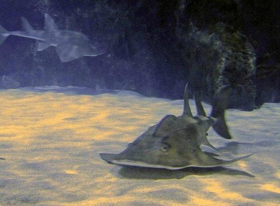 Newport Aquarium: Shark Tank
