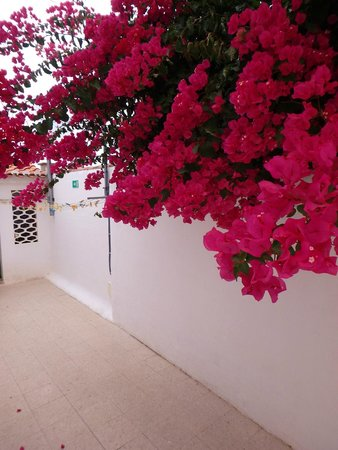 Sollagos Apartamentos Turisticos: Flowering trees on the property