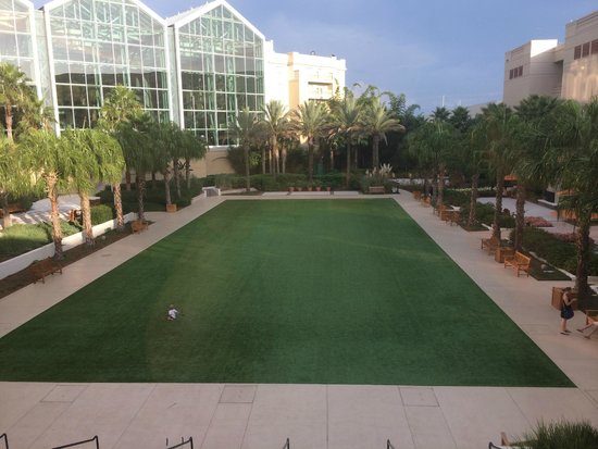 Gaylord Palms Resort & Convention Center: Soccer, frisbee, tossing the football...